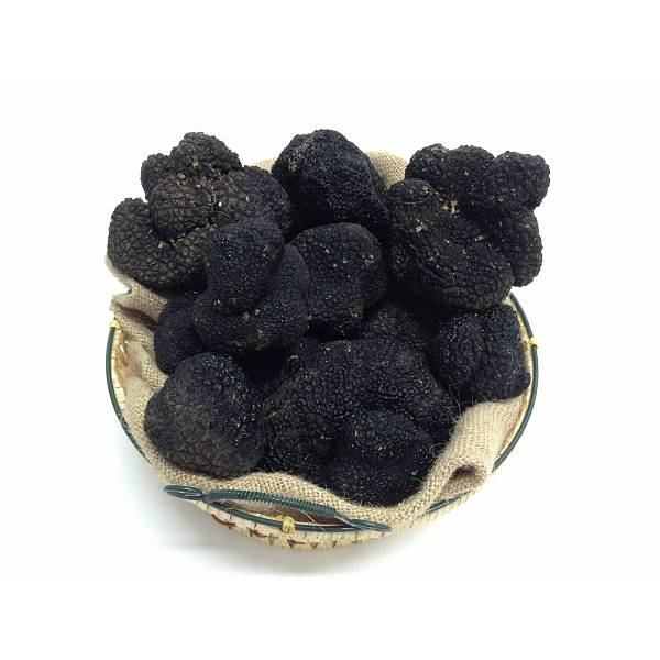 S.Z. Tartufi Fresh Summer truffle FIRST CHOICE - Tuber Aestivum Vitt. FROM ABRUZZO